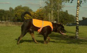 Kamizelka odblaskowa dla psa + nadruk